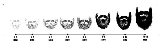 Стадии роста бороды